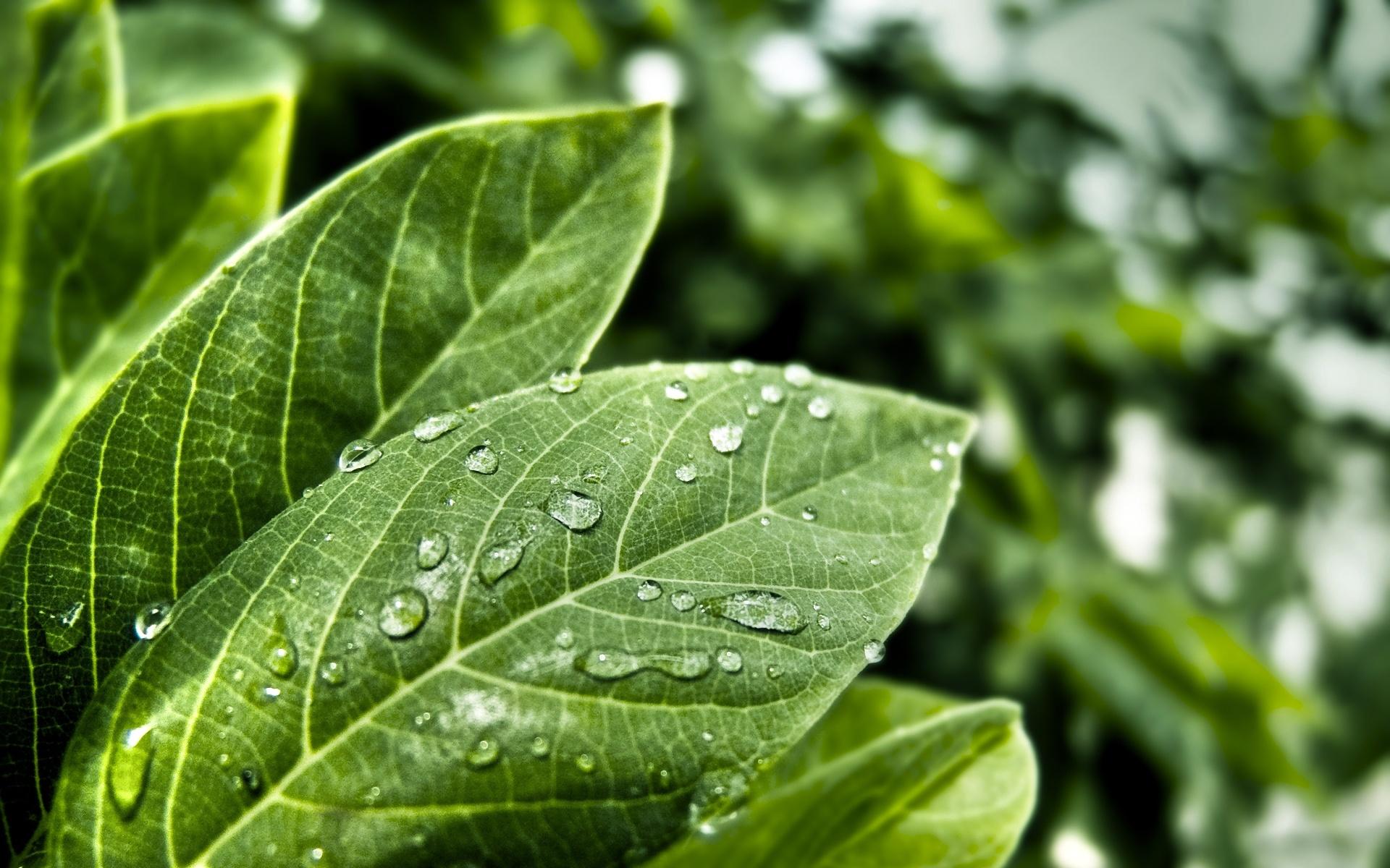 листья растение капли без смс