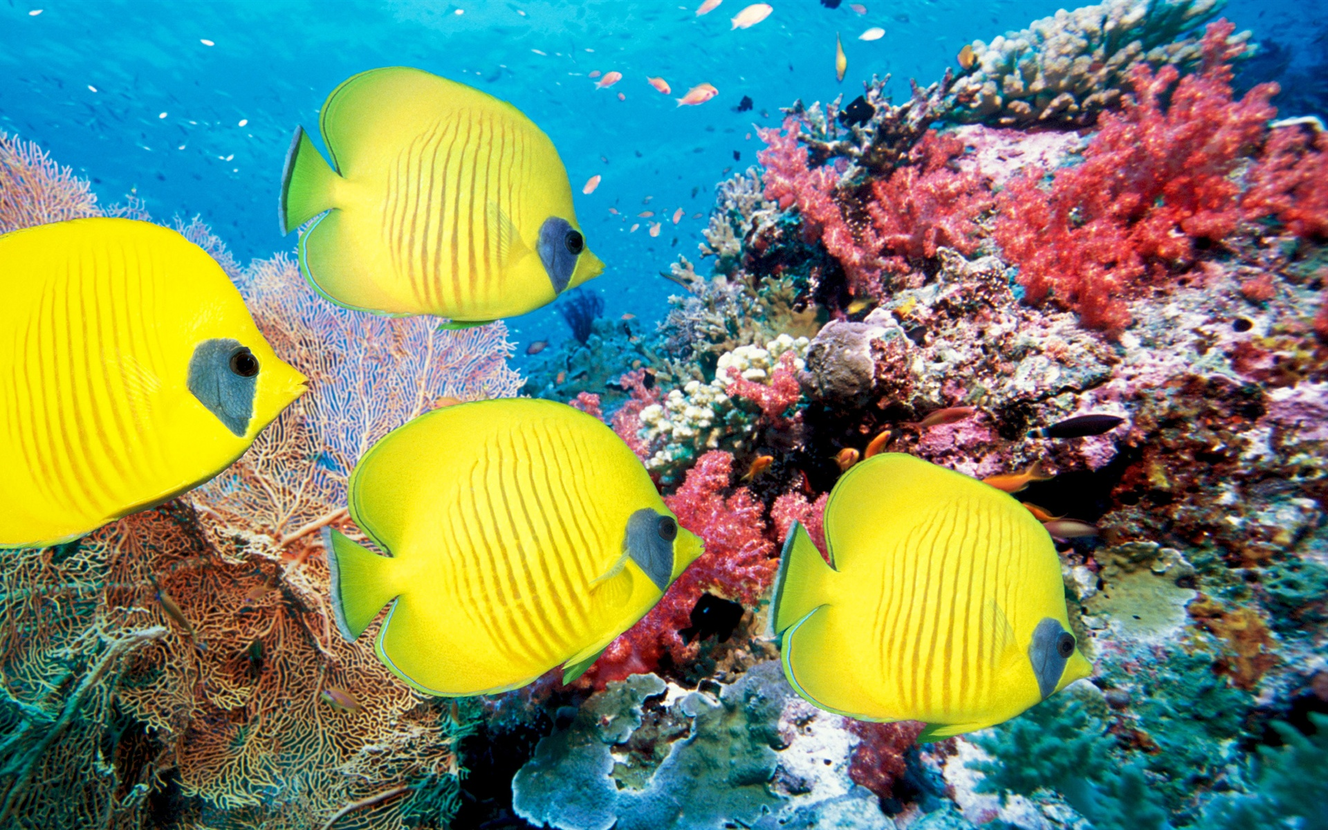 Wallpaper underwater world of tropical fish and corals for Exotic aquarium fish