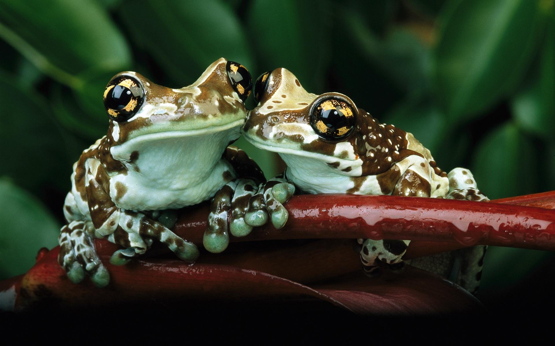 жаба лист фон  № 3164684 загрузить