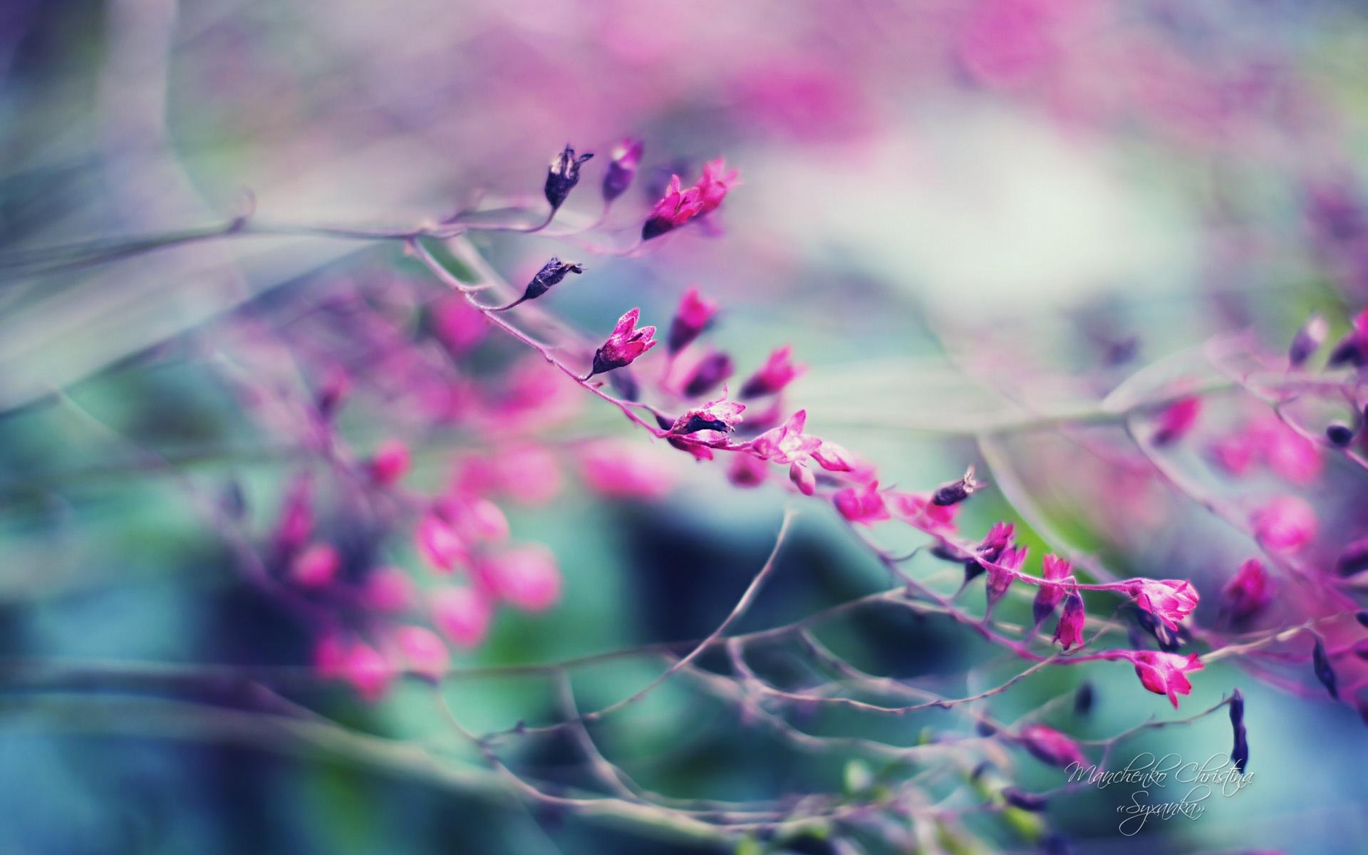 Adquiere Aqui Estos Fondos De Pantalla Con Flores Hermosas: Fondos De Pantalla Hermosos Jardines, Flores Moradas