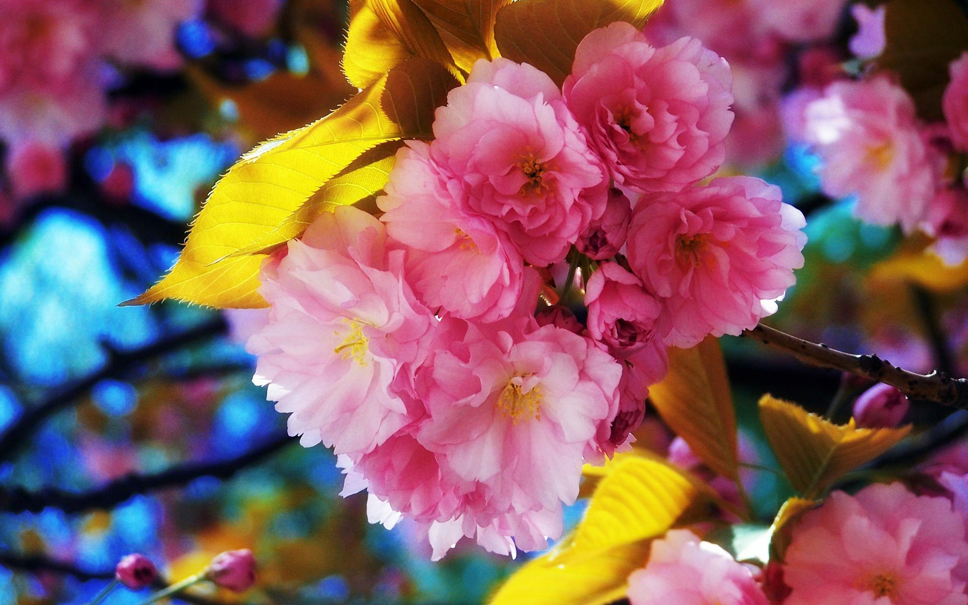 Lindas Flores Da Primavera Flor Papéis De Parede  1920x1200