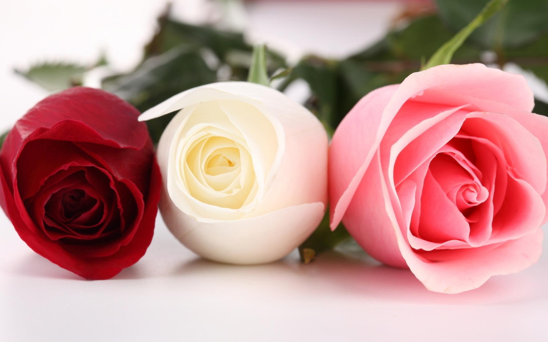 drei verschiedene farben der rosen 1920x1200 hd hintergrundbilder hd bild. Black Bedroom Furniture Sets. Home Design Ideas
