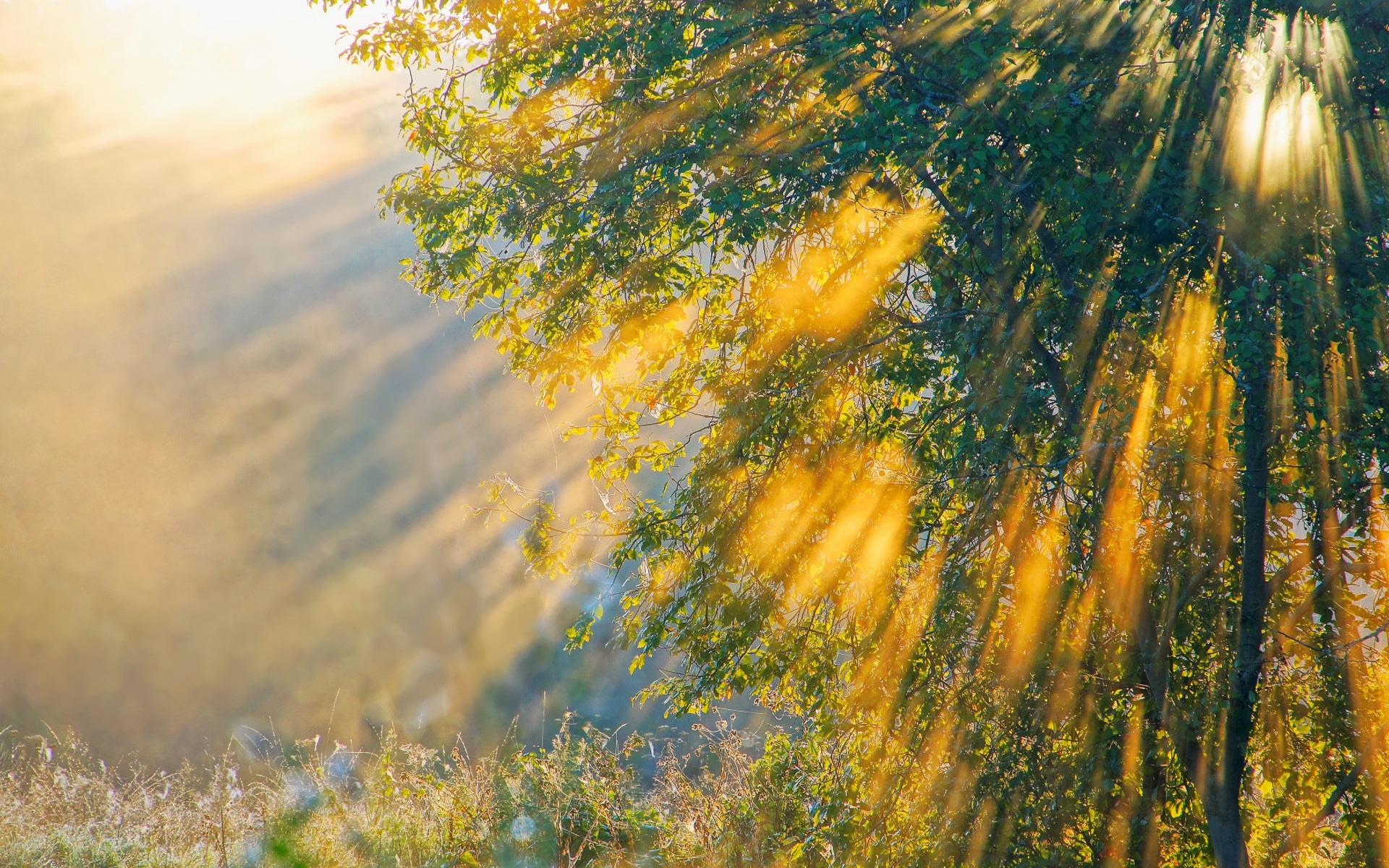Nature Sunshine Galaxy S4 Wallpapers: 배경 화면 아침, 자연, 나무 햇살 1920x1200 HD 그림, 이미지