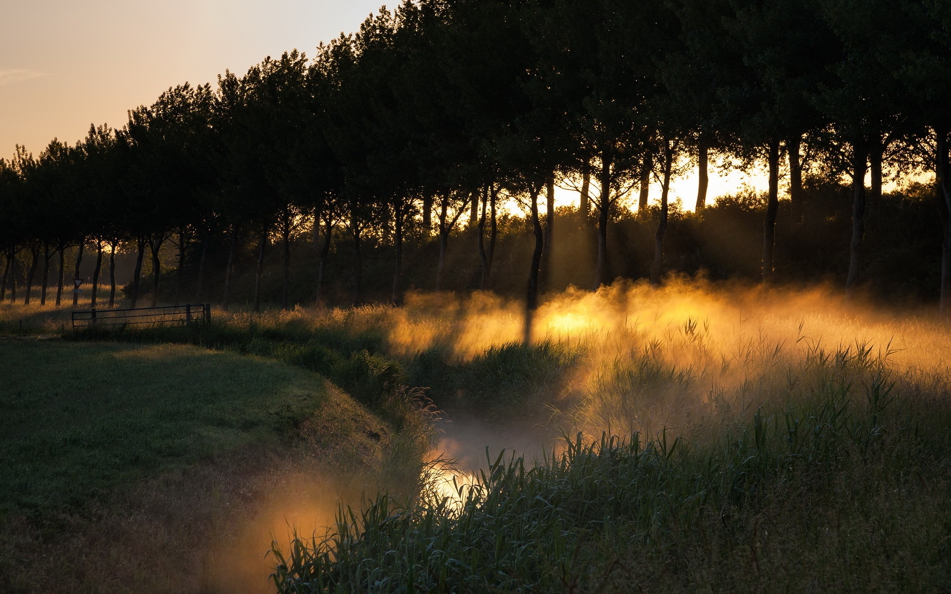 Закат в тумане в лесу бесплатно