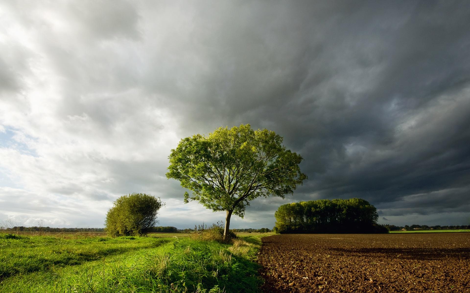 поле природа тучи загрузить