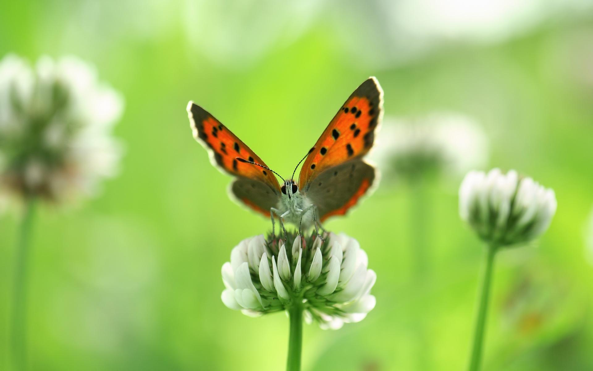 насекомое цветок без смс