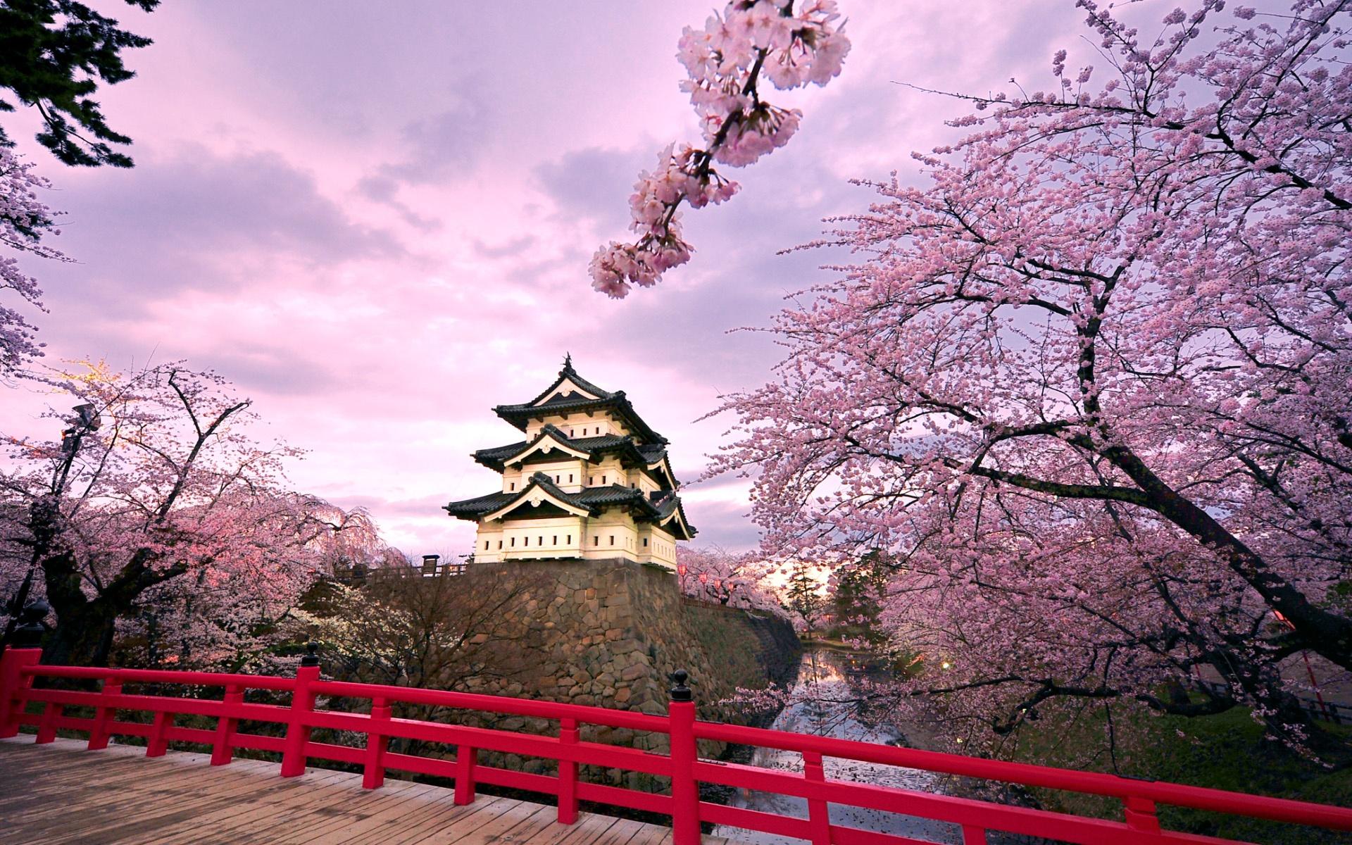 Fonds d'écran Japon château de Hirosaki, rose fleurs de cerisier 1920x1200 HD image