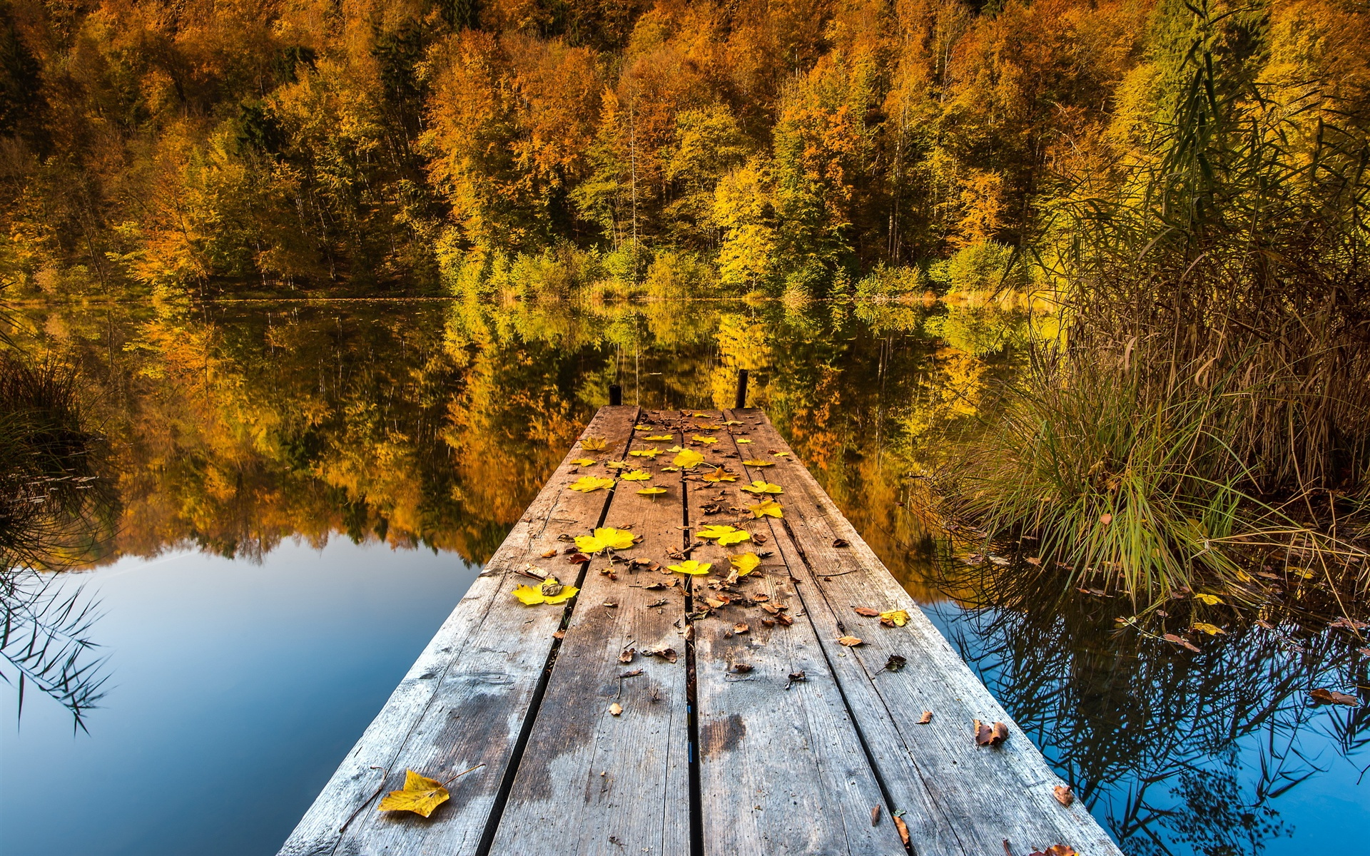 Озерцо мостик лес горы  № 2950006 бесплатно