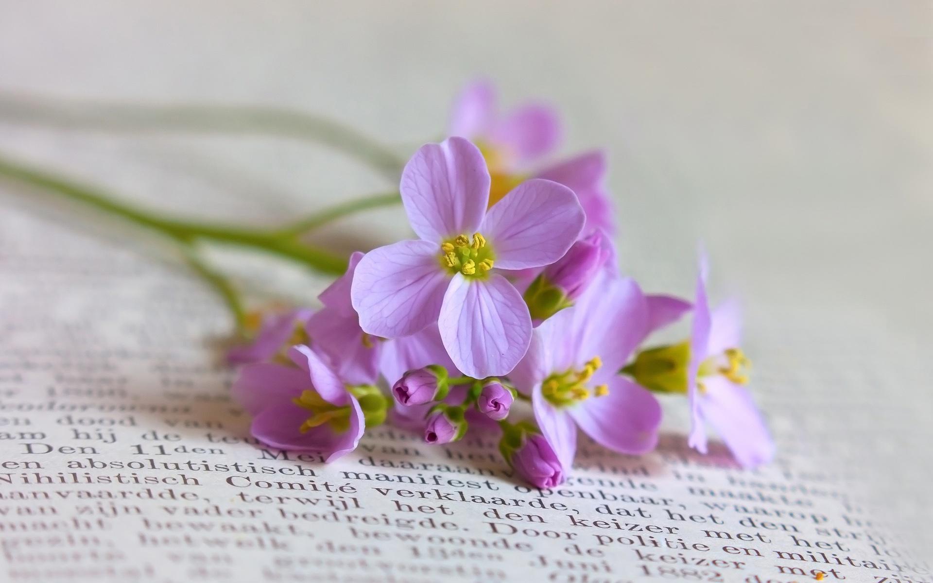Fondos de pantalla Libros con flores de color púrpura still life ...