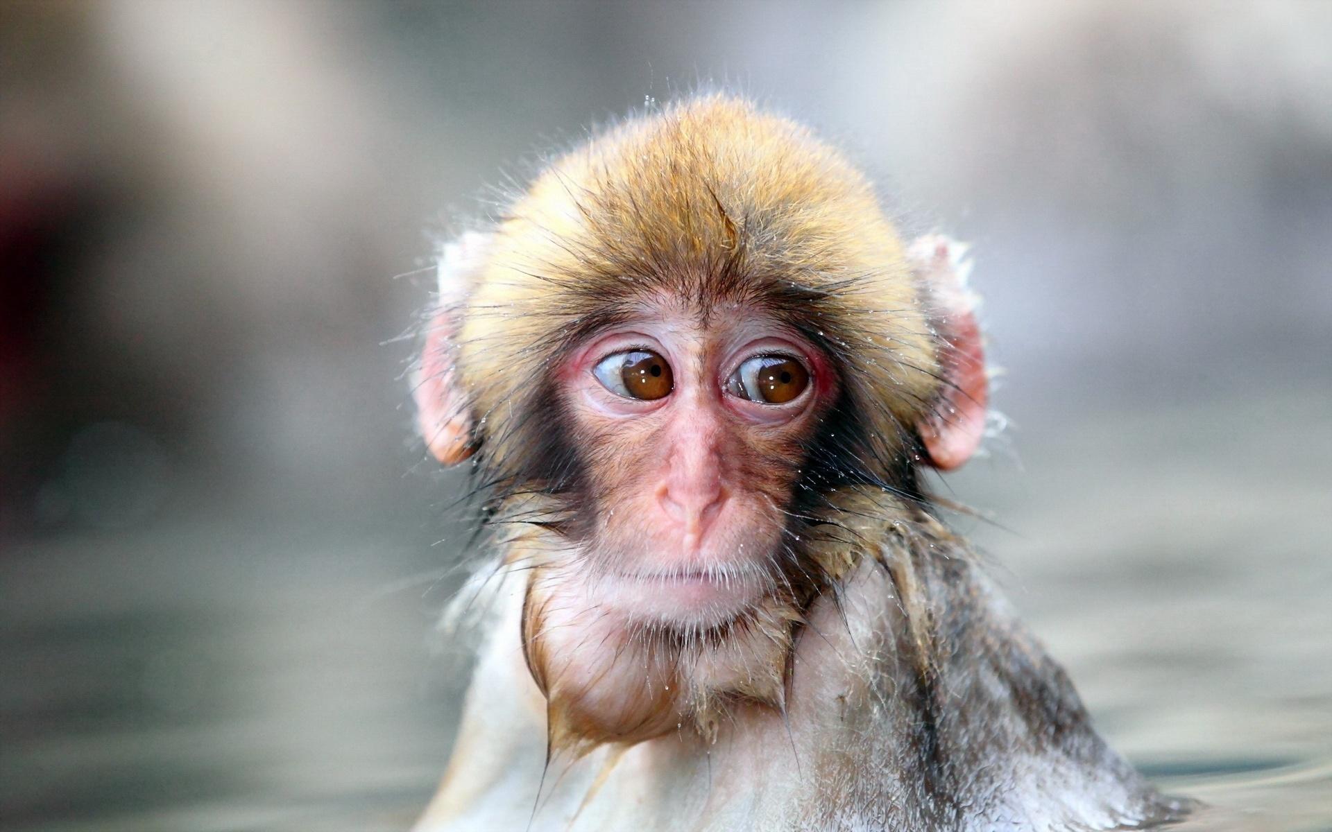 猿の画像 p1_38