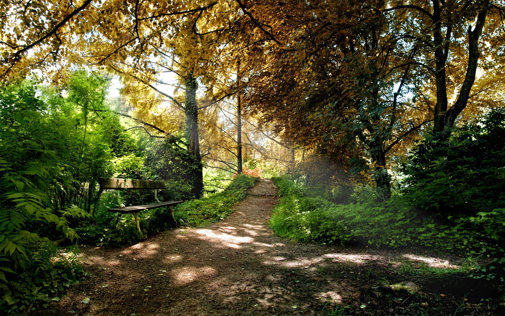 природа деревья лес тропа  № 1206366  скачать