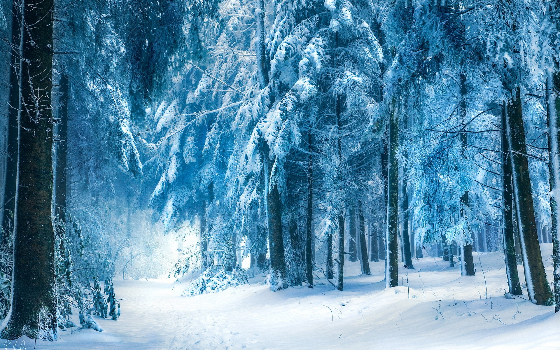 Wallpaper Winter Landscape Snow Forest 1920x1200 Hd Picture