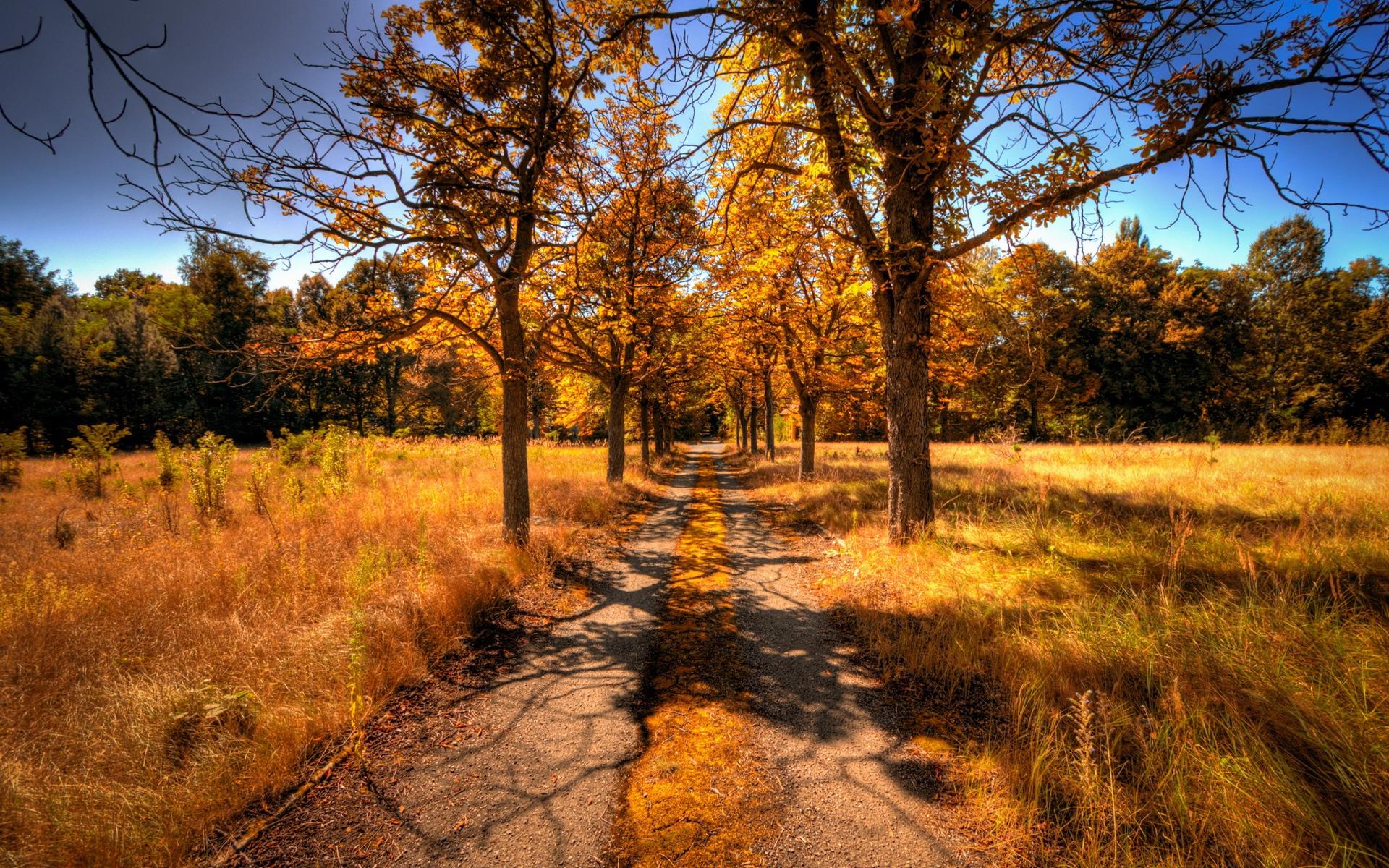秋季树叶,景观的黄色和草,路壁纸图片百味v树叶赛图片