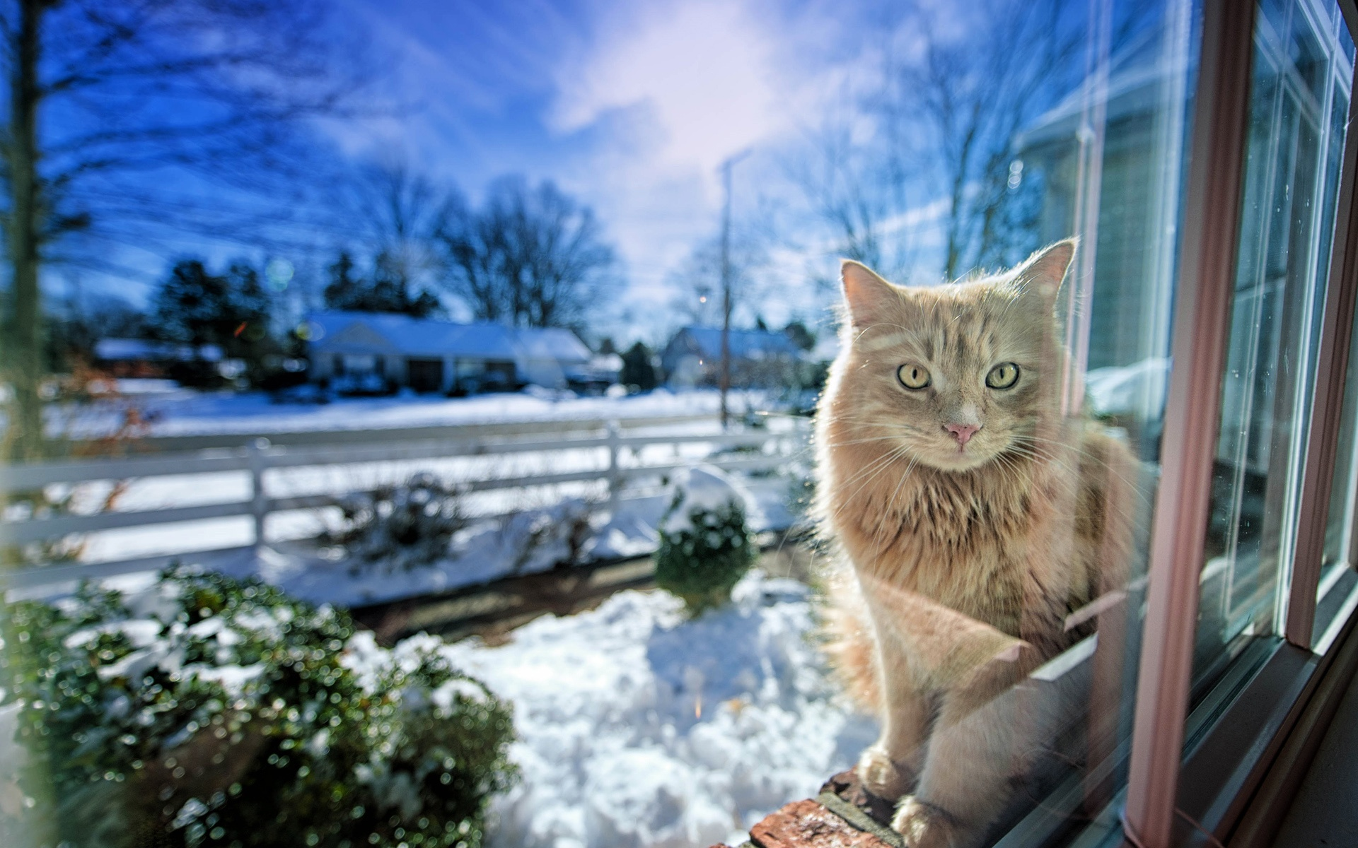 Chat dans la fen tre hiver neige fonds d 39 cran for Fenetre hiver