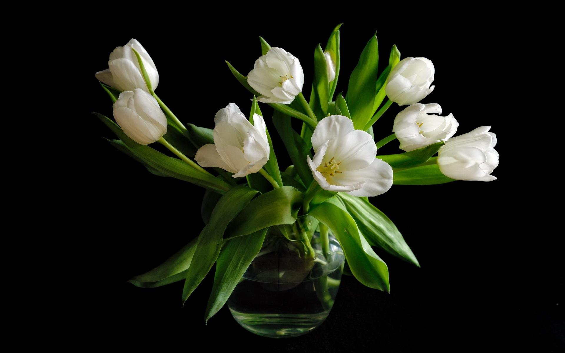 Wallpaper Vase White Tulip Flowers Black Background 1920x1200 Hd