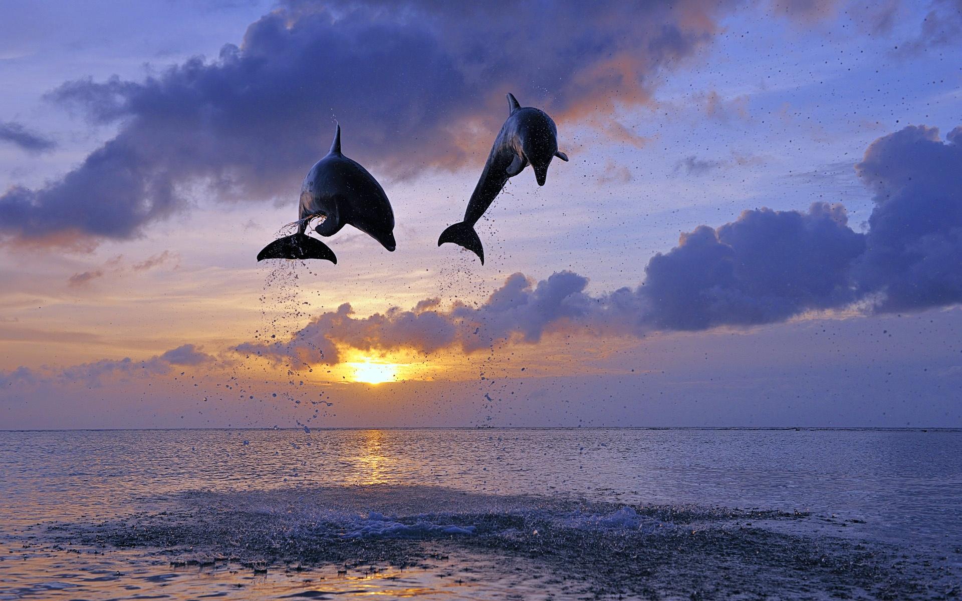 Прыжок дельфина на закат бесплатно