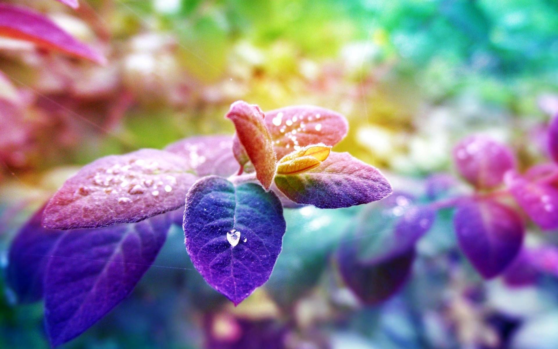 цветок фиолетово-зеленый макро без смс