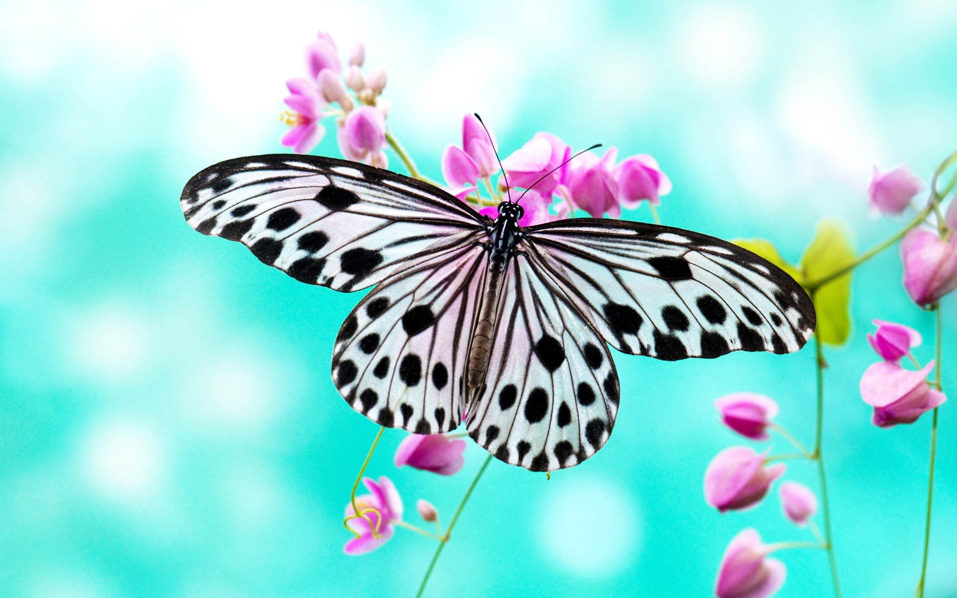 Wallpaper Butterfly Love Purple Flowers 1920x1200 Hd Picture