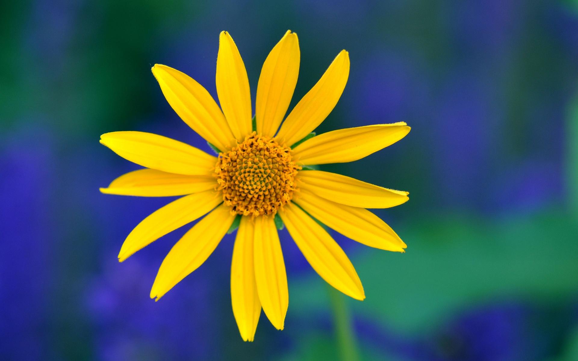 노란 꽃, 꽃잎 매...