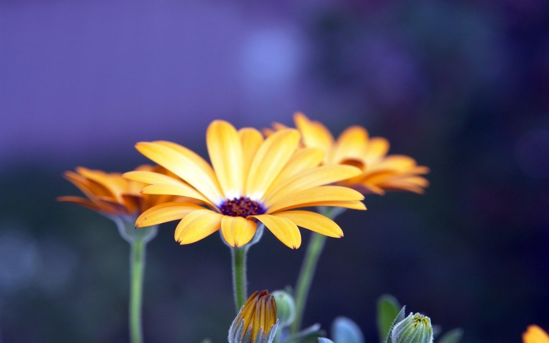 цветы макро желтые flowers macro yellow  № 910207 без смс