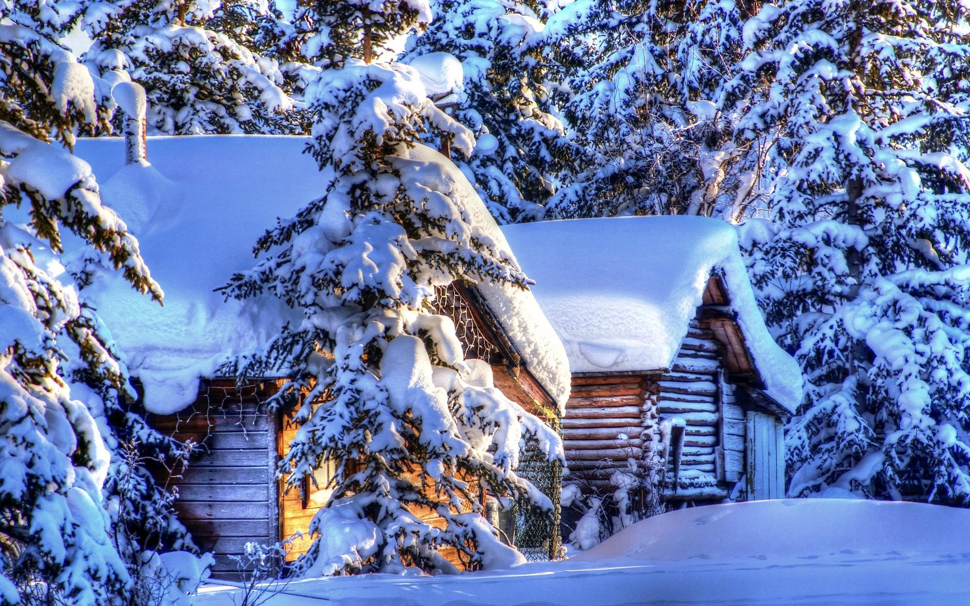Wallpaper Alaska Winter Landscape Snow Forest Spruce