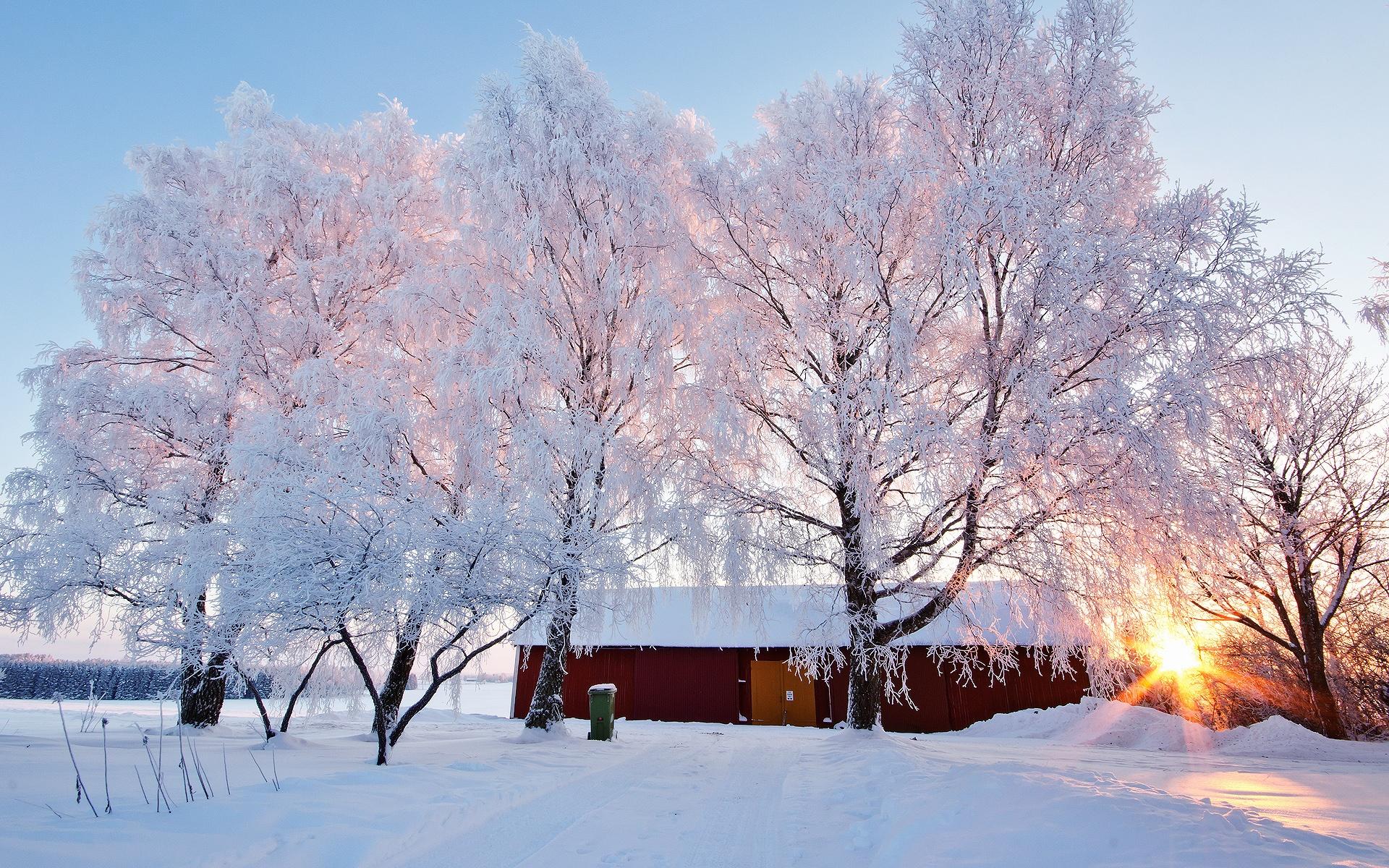 Деревья в инее  № 1191636 без смс