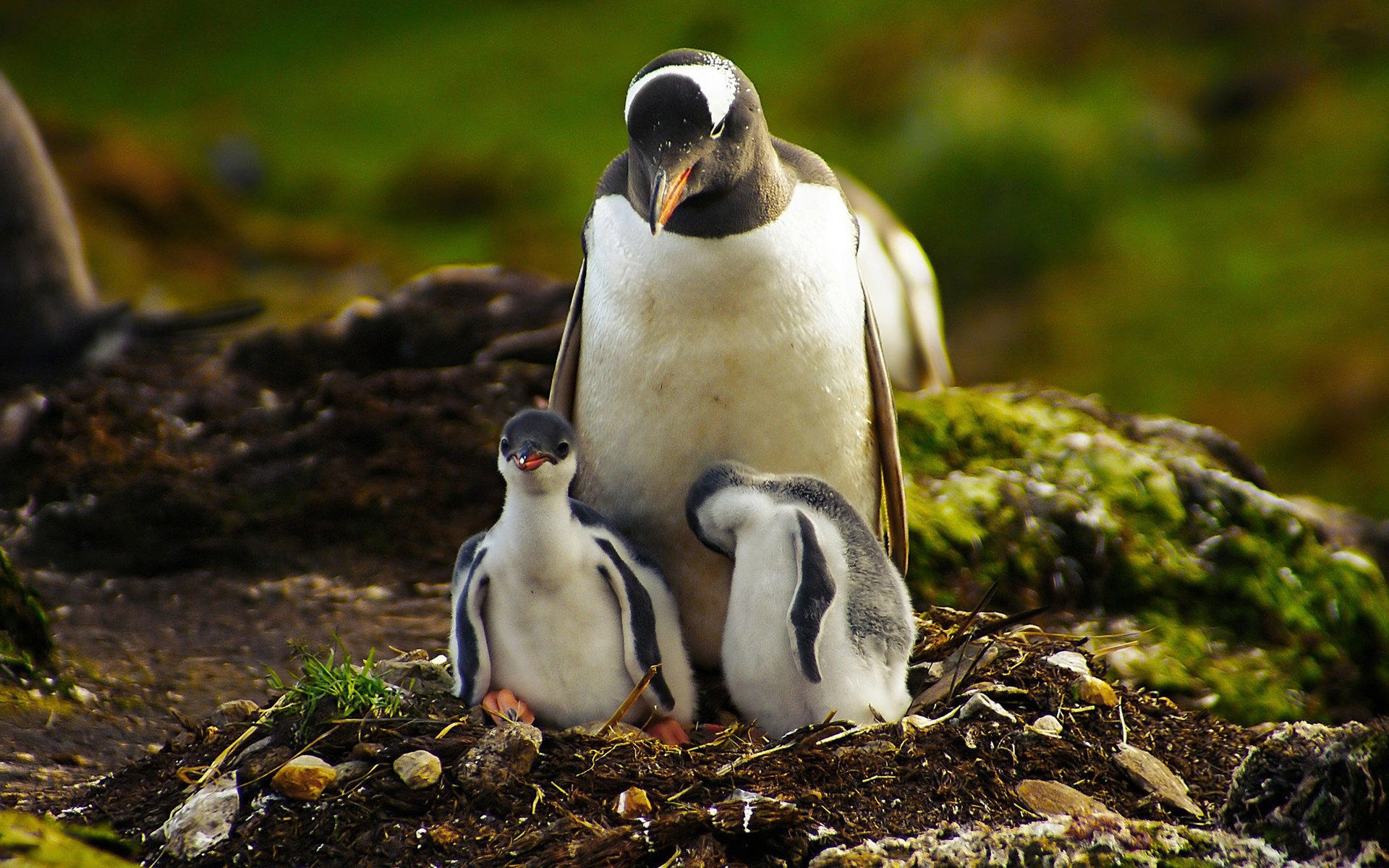 ペンギン Suicaキャラクター の画像 原寸画像検索