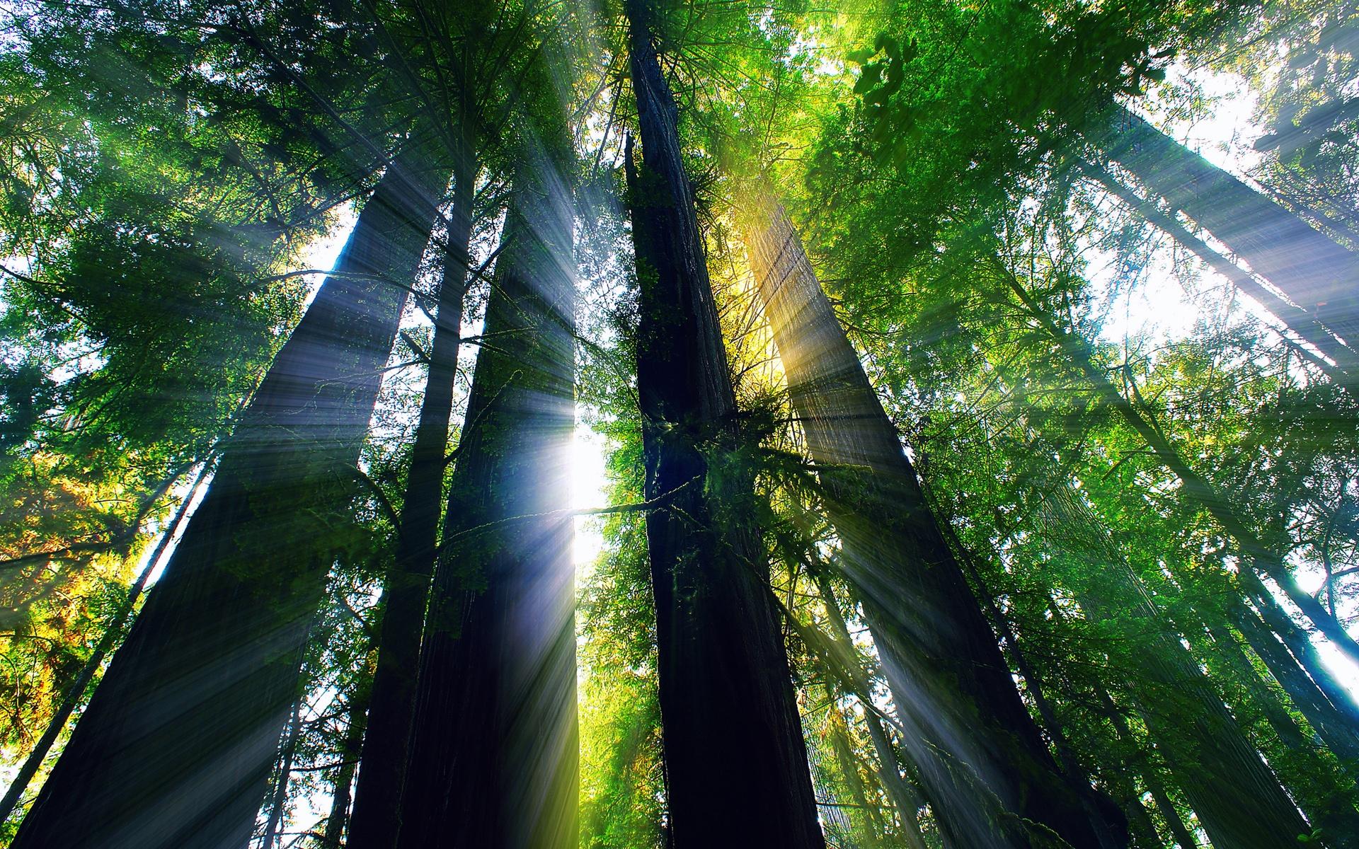 Wallpaper USA California Summer Forest Trees Sun Rays 1920x1200