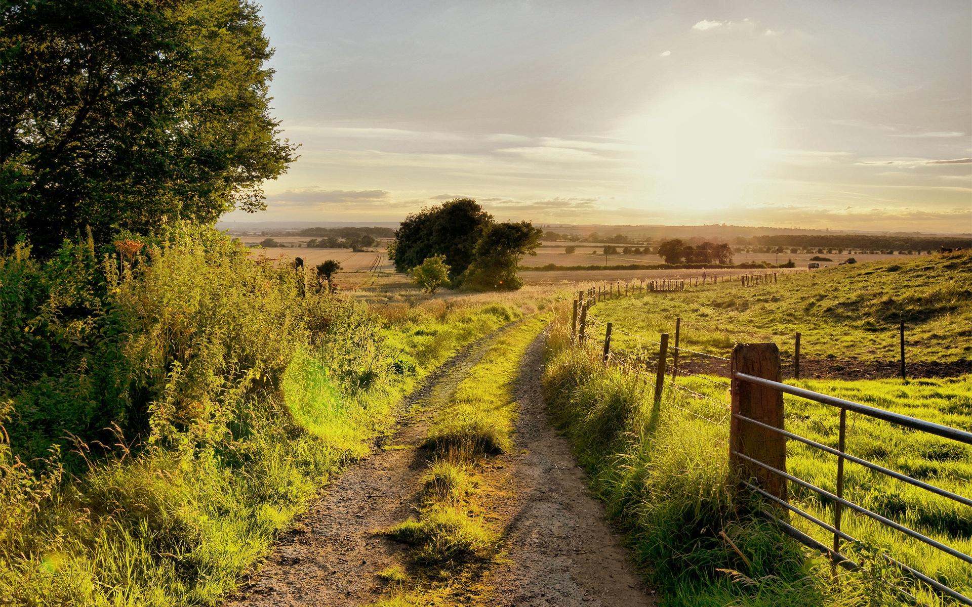 여름 자연 풍경, 도로, 나무, 울타리, 잔디에, 태양, 배경 화면 ...