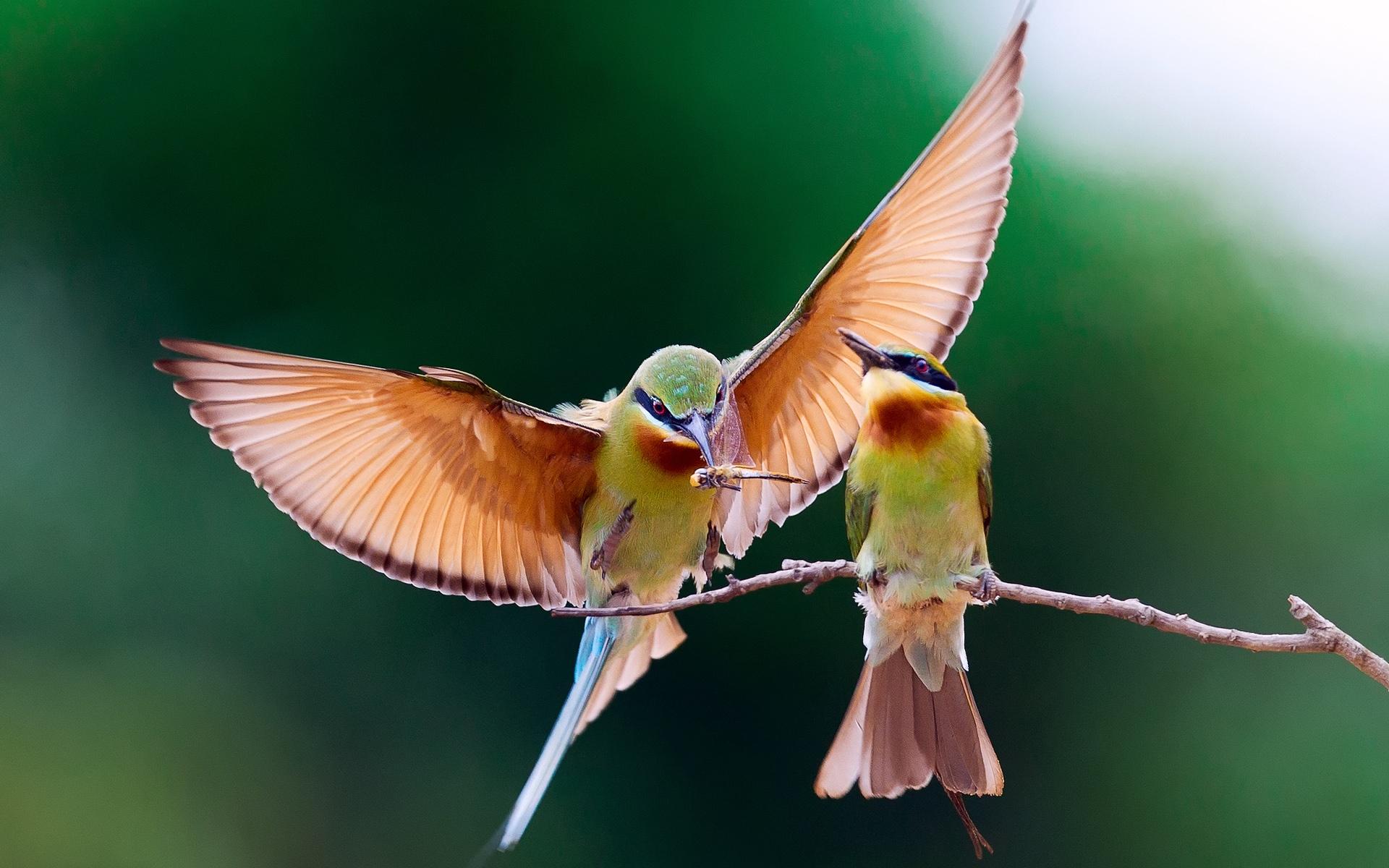 картинка с двумя птицами человек