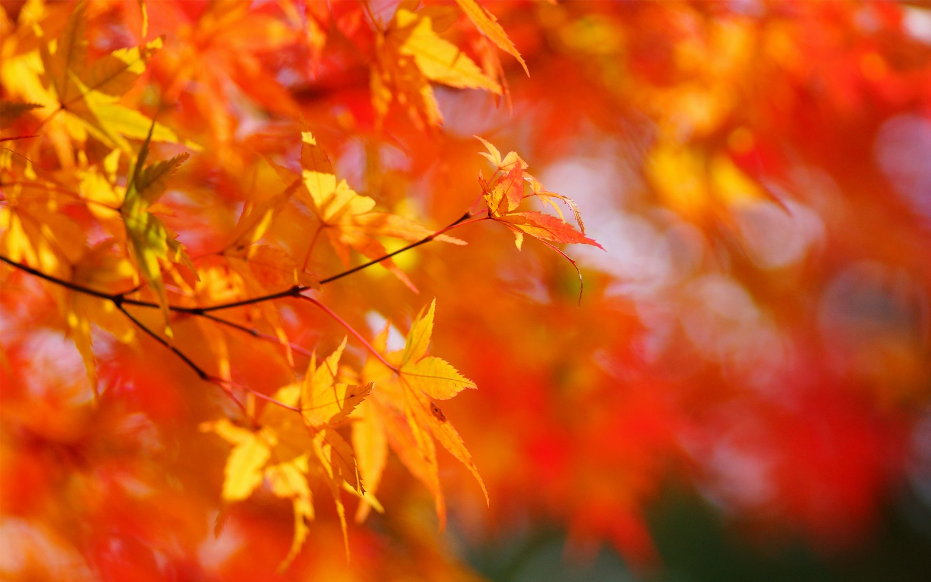 деревья листва осень солнце  № 3191731  скачать