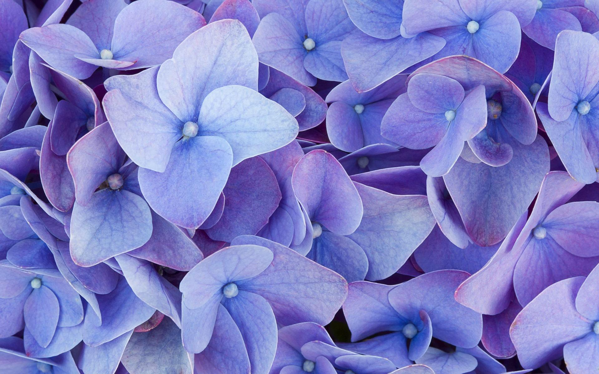 картинки с цветами фиолетово-синего при выборе хостинга