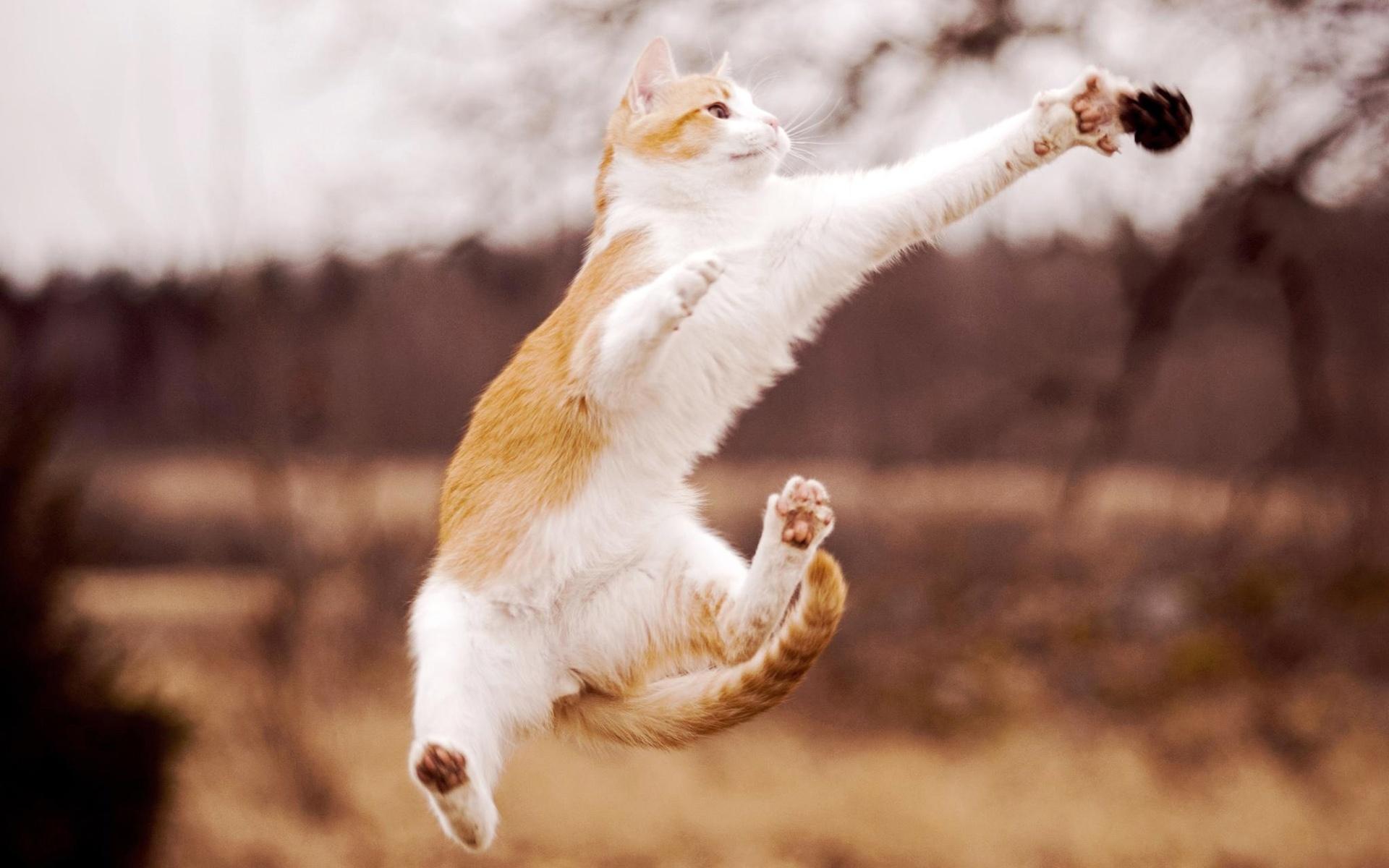 壁紙 猫美しいジャンプ 1920x1200 Hd 無料のデスクトップの背景 画像