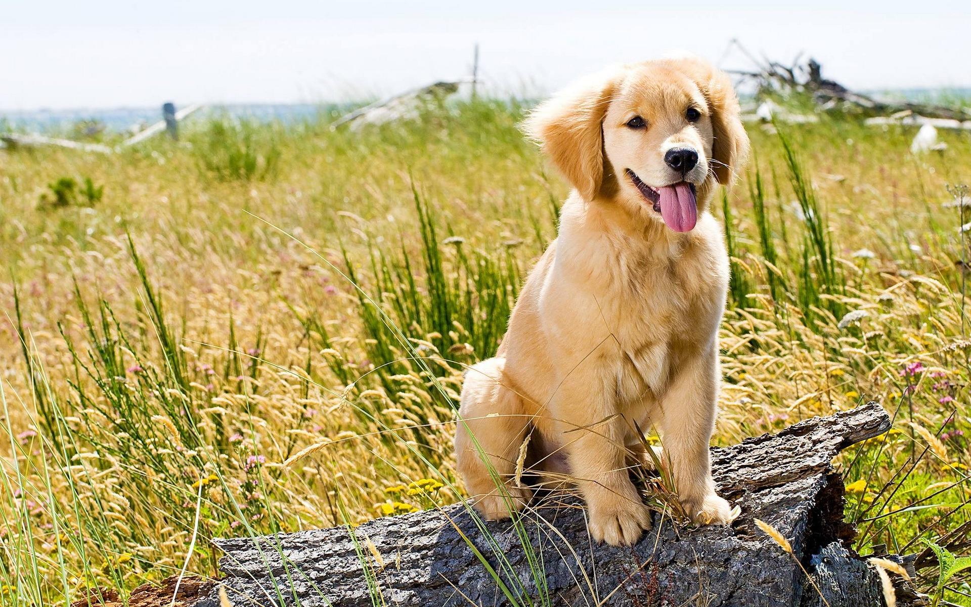 пёс язык собака на бревне  № 2524080 загрузить