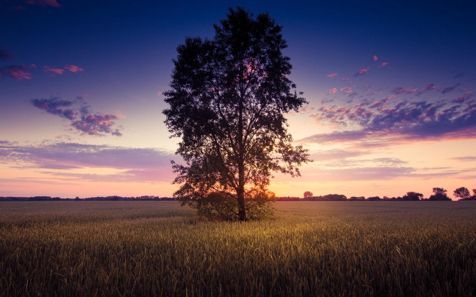 одинокое дерево небо закат загрузить