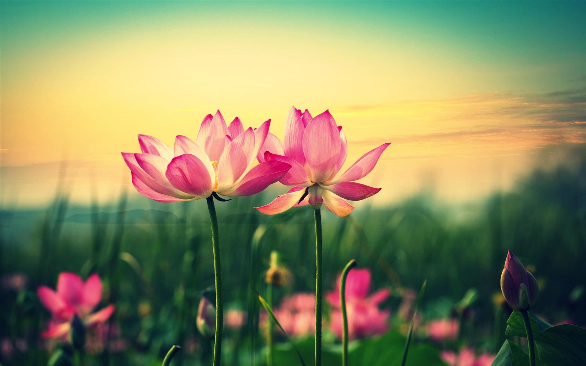 картинки на профиль цветы брат младший