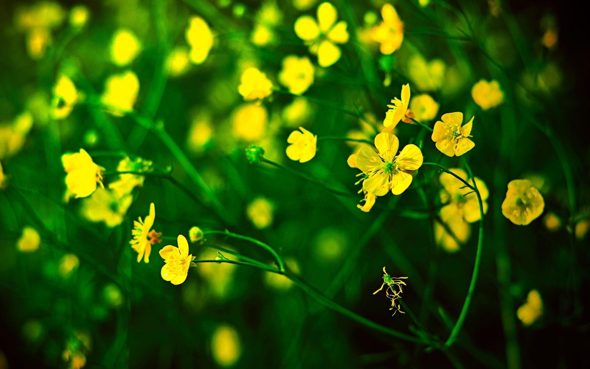 местности называется картинки на рабочий стол зеленый желтый настроен особым
