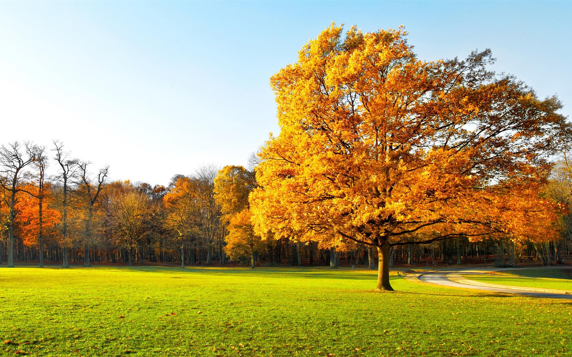 Arbres d 39 automne beau jardin feuilles jaunes herbe for Beaux arbres de jardin