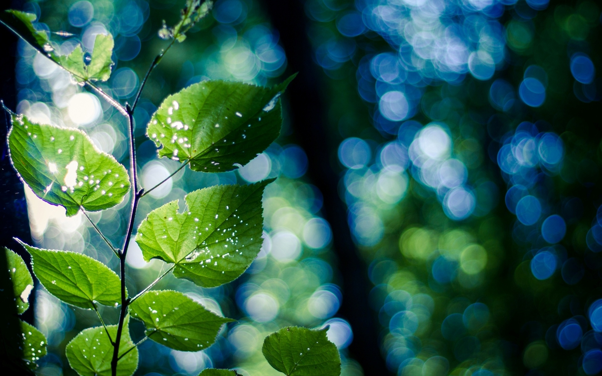 красивая картинка серо-зеленая рассказывают