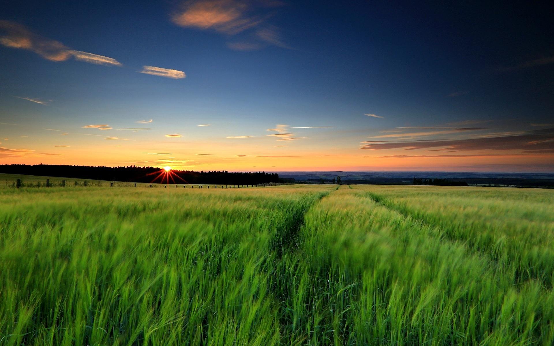 картинки закат и трава люди путают крупными