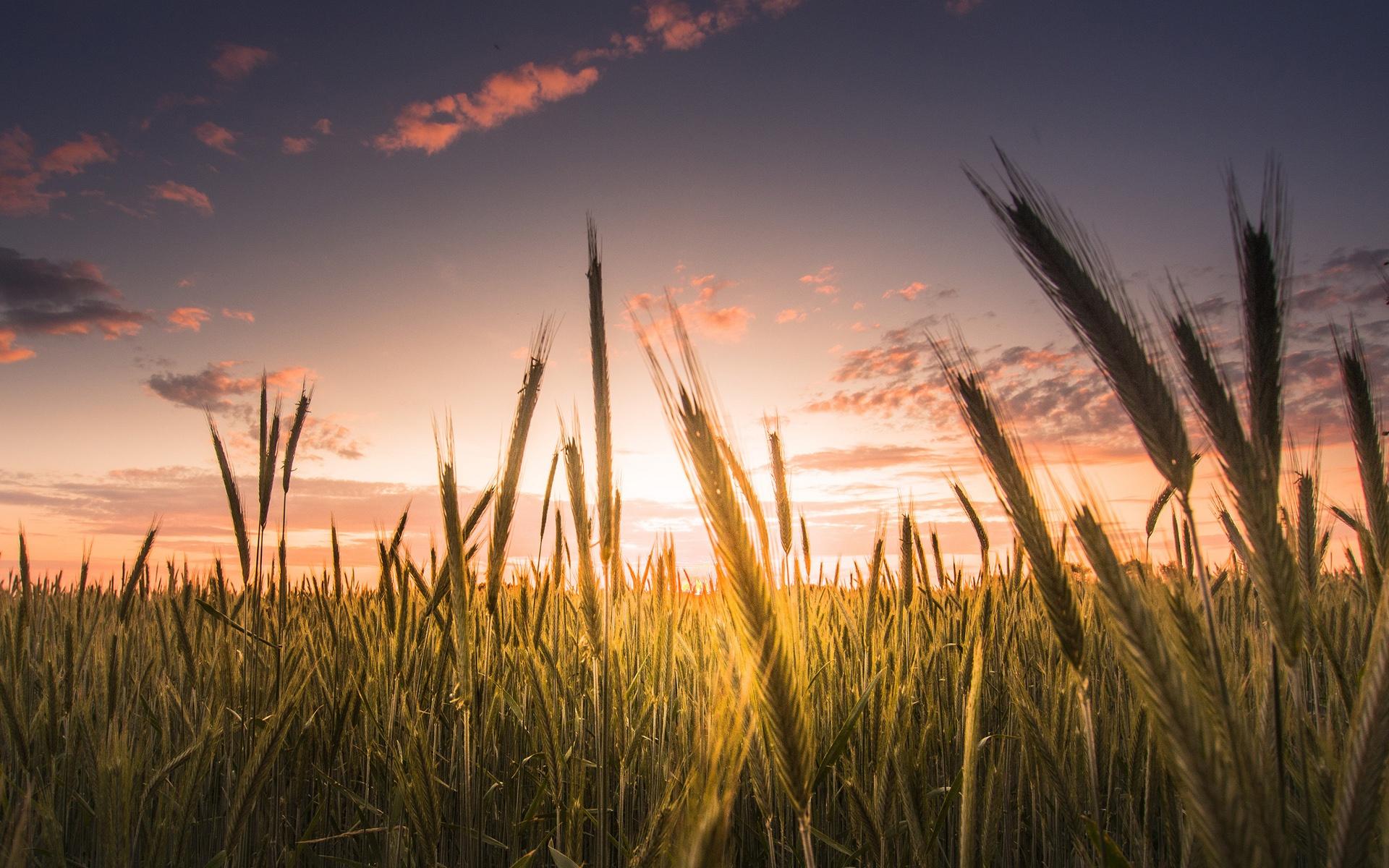 красный закат над полем бесплатно