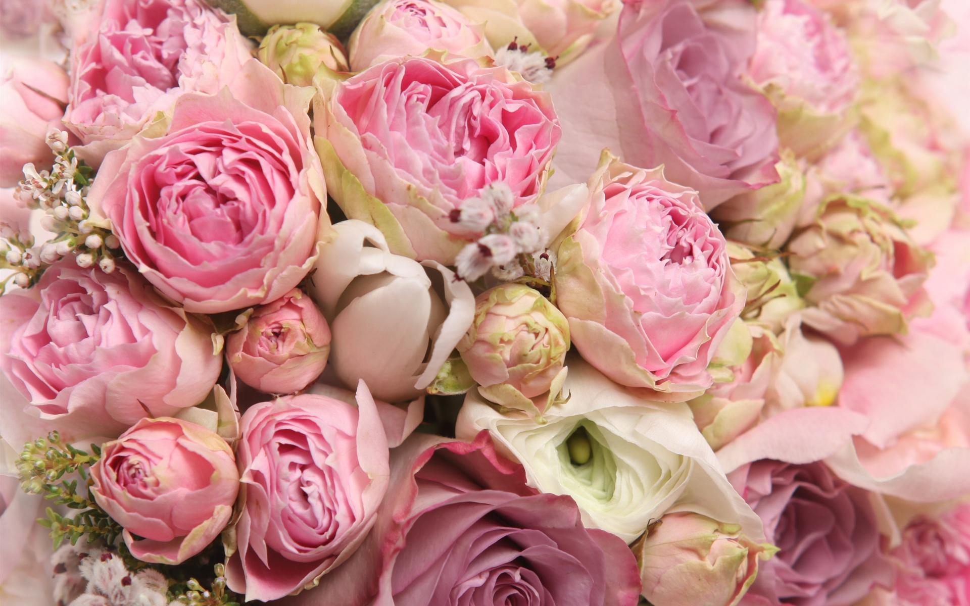 Wall Paper Wide Pink Rose Colours Soft Nature Flower: 壁紙 ピンクの花、美しいバラ、ロマンス 2560x1920 HD 無料のデスクトップの背景, 画像