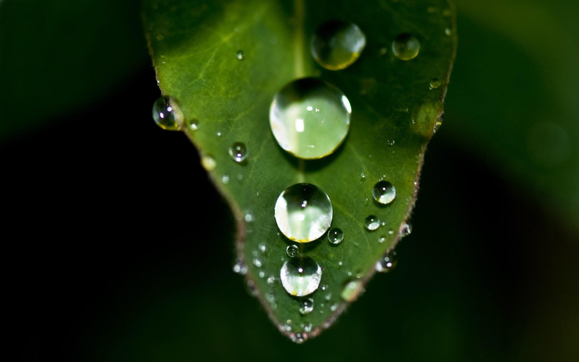 природа листья капли вода скачать