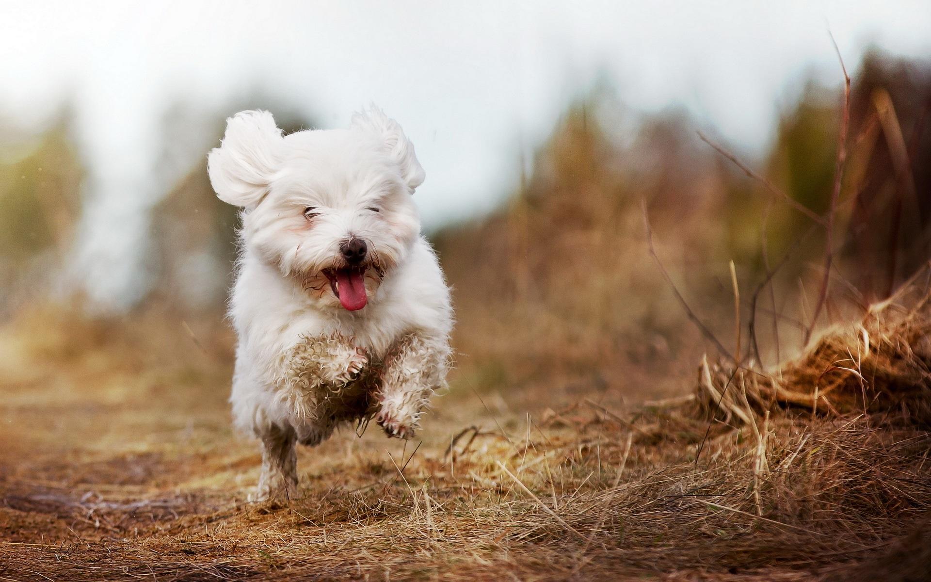 Мчащийся собачка без смс