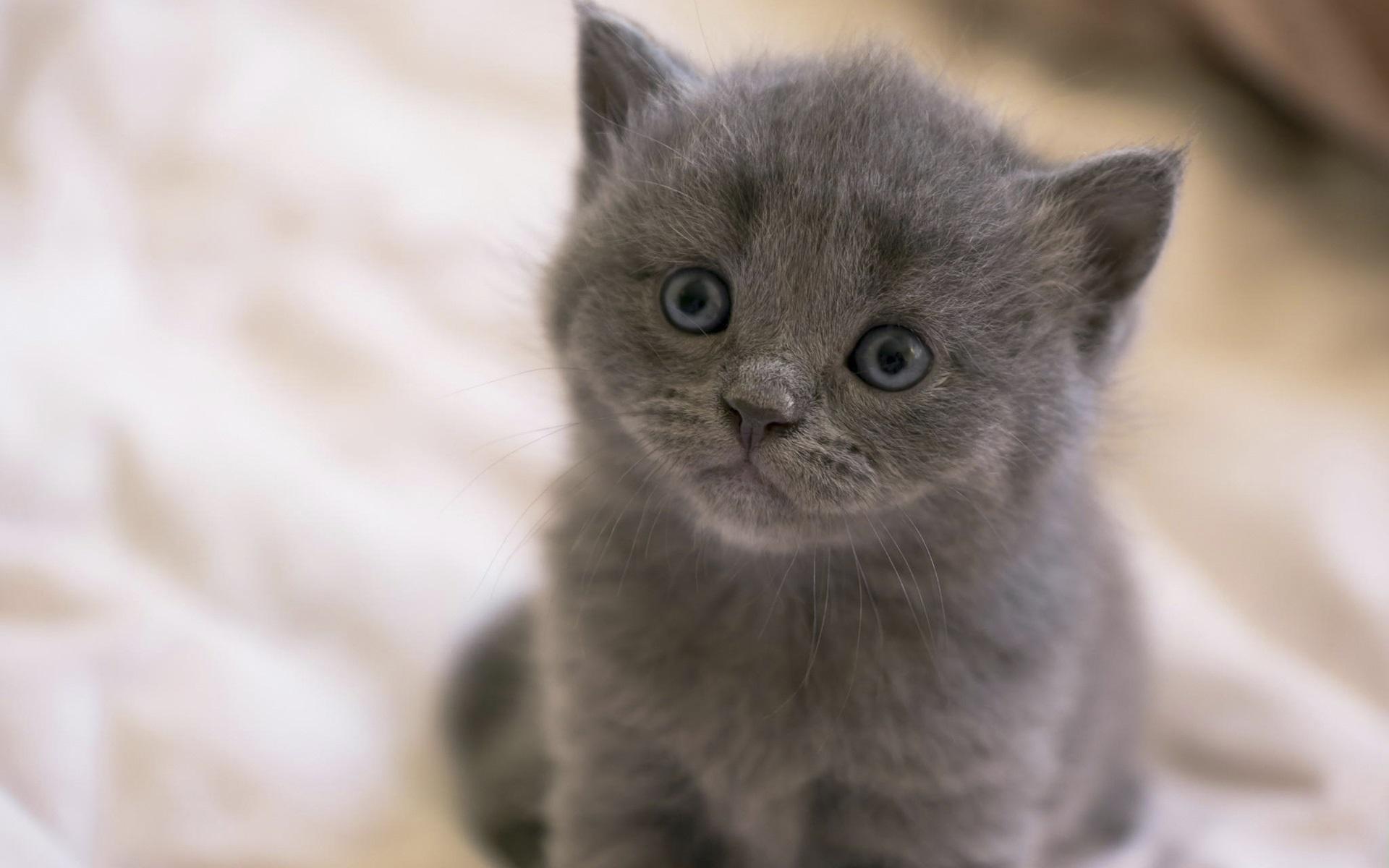 Кошка с двумя котятами фото так очень