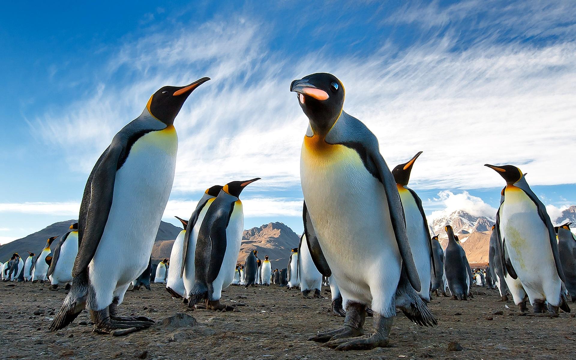 壁紙 多くのペンギン 山 空 1920x1200 Hd 無料のデスクトップの背景