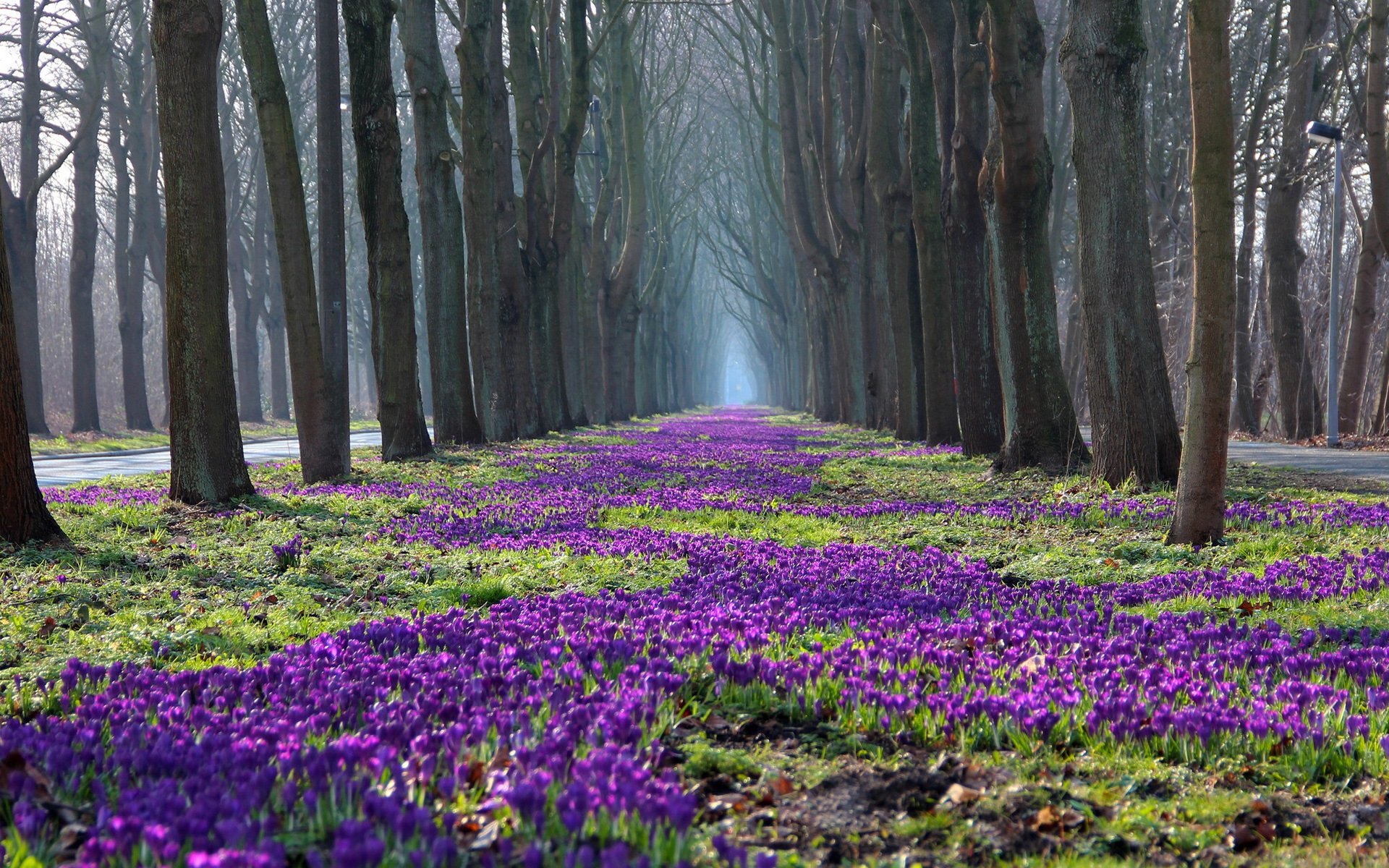 wallpaper park spring landscape trees flowers crocus path