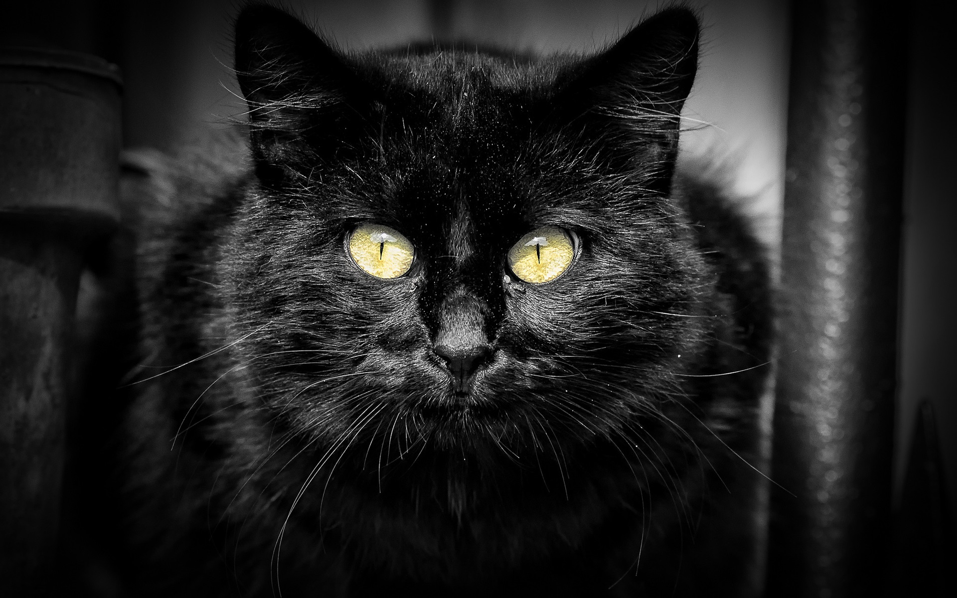 Wallpaper Black Cat Yellow Eyes Black Background 1920x1200 Hd Picture Image