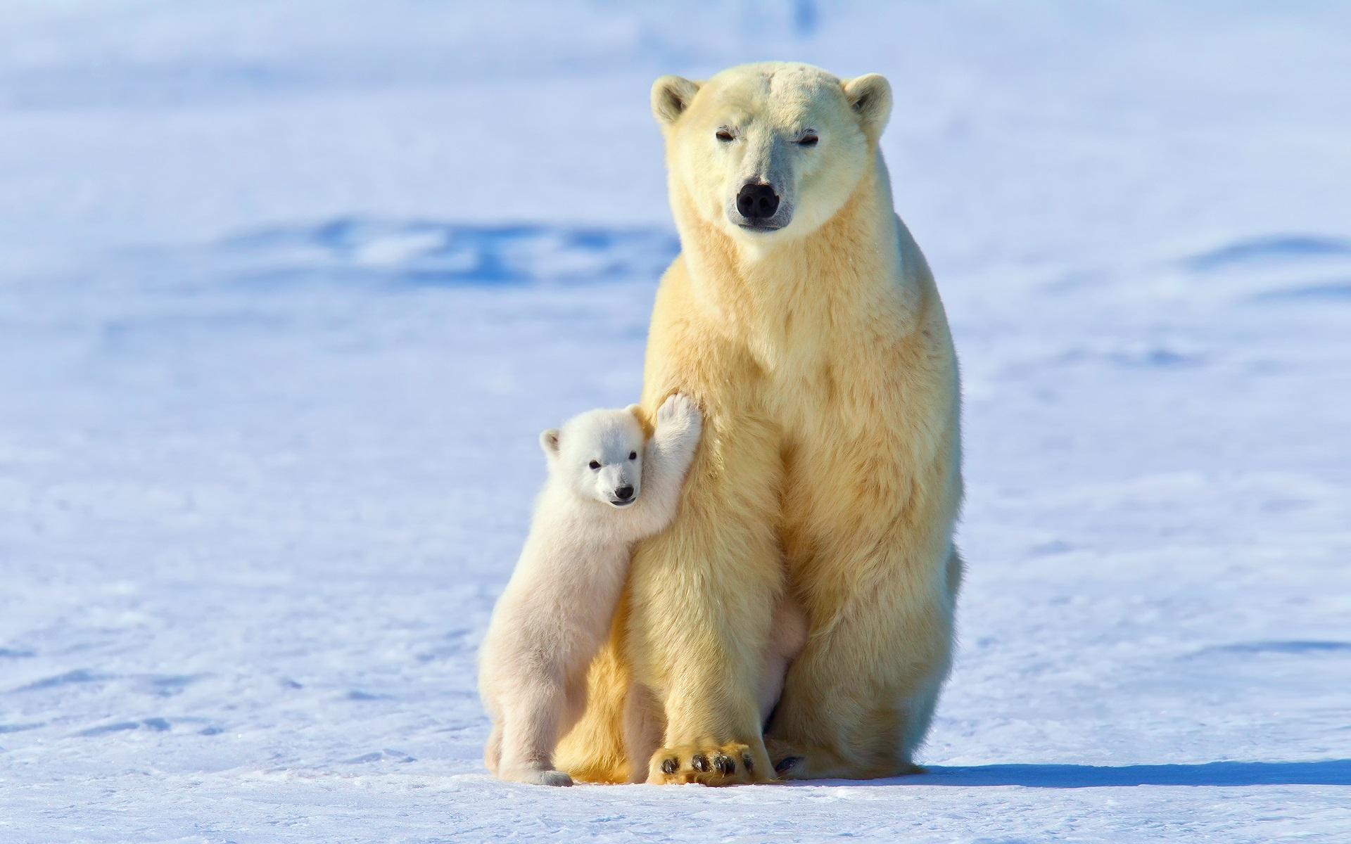 фото белой медведицы с медвежонком при производстве