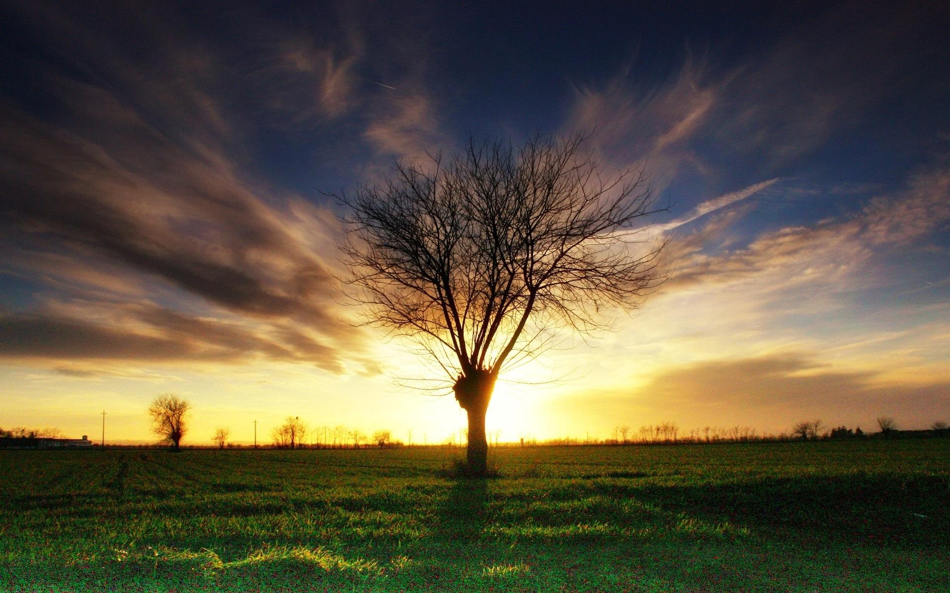 закат, деревья, зелень загрузить